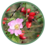rosa-canina-fruit-oil.png